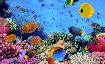 ecosistema organizacional