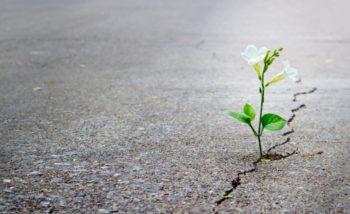 Organizaciones Resilientes